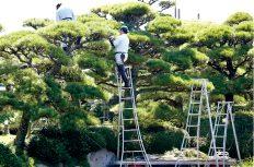 造園業の仕事は「土木」と「建築」に奪われる?