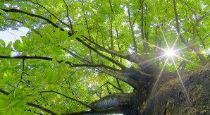 土木技術者は「強力な光のフォース」を放つ人が多い。視える社長が贈る!沈んだら樹木に話かけろ!