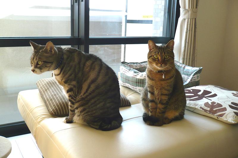 猫関連の仕事をするきっかけとなった一休くん(左)と海くん(右)